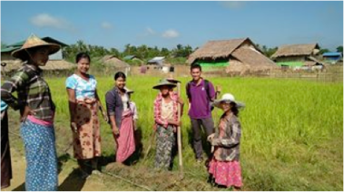 Providing Agricultural advice in Myanmar
